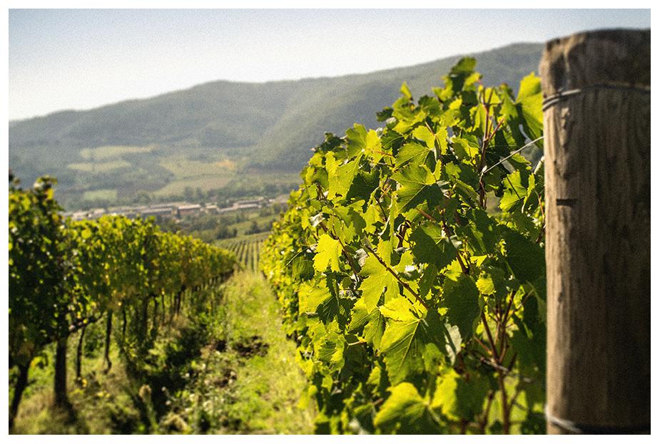 Habgood-Images-Tuscany,-Italy-26